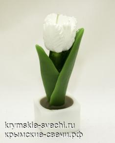 Тюльпан в кубе
